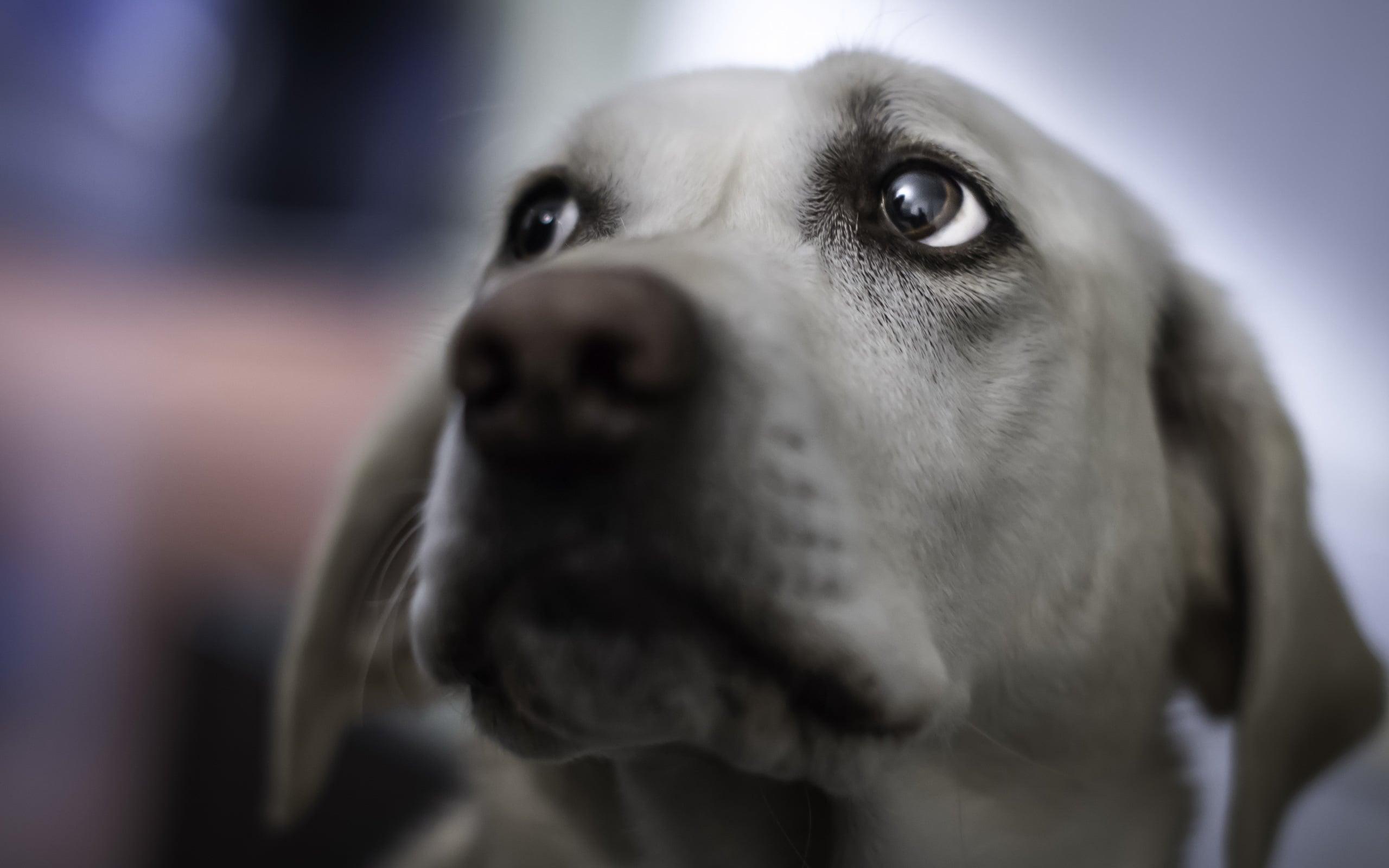 Contusión cerebral en los perros