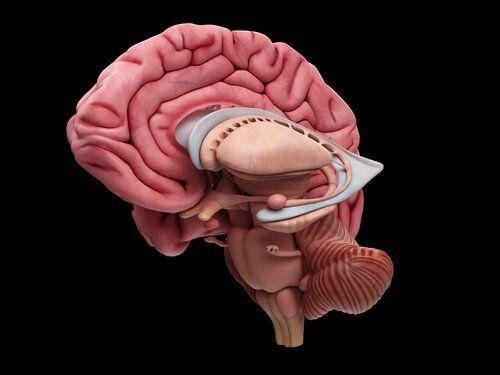 diferentes enfermedades del cerebro