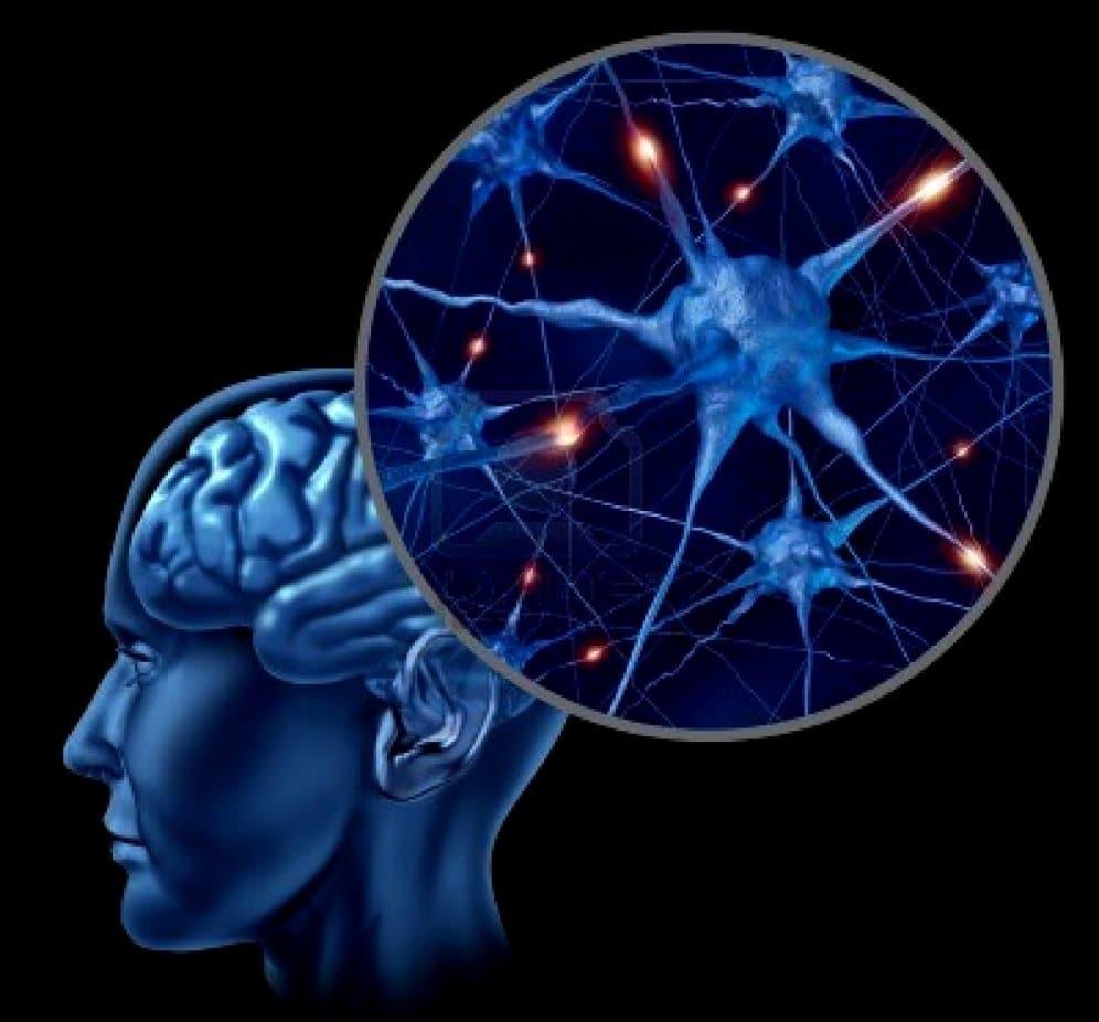 inflamacion-del-cerebro-por-estres-2