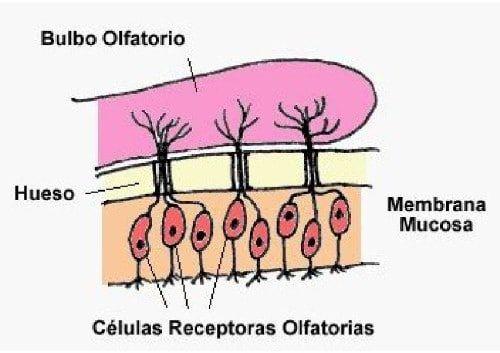 anosmia 9