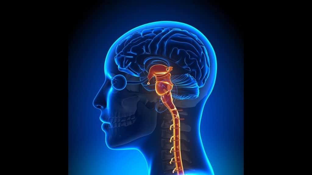 tallo encefalico