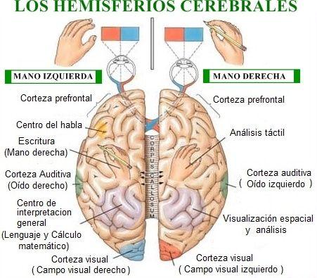 epilepsia 14
