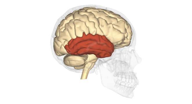 epilepsia 28
