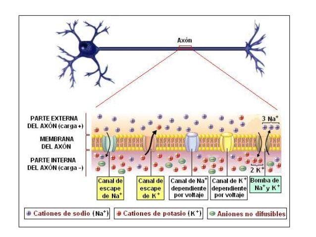 epilepsia 56