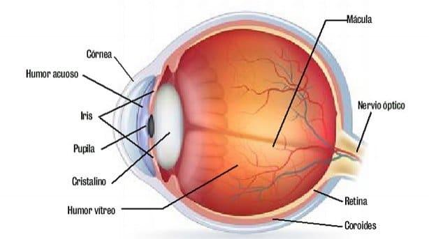 nervio-óptico