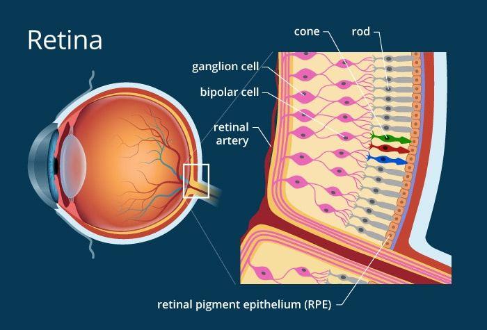 retina-1