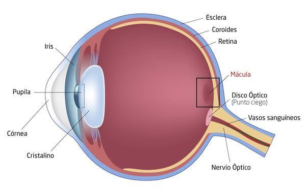 retina-4