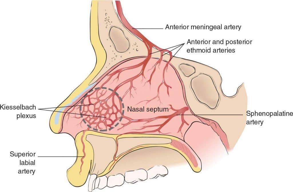 anatomia de la epistaxis posterior