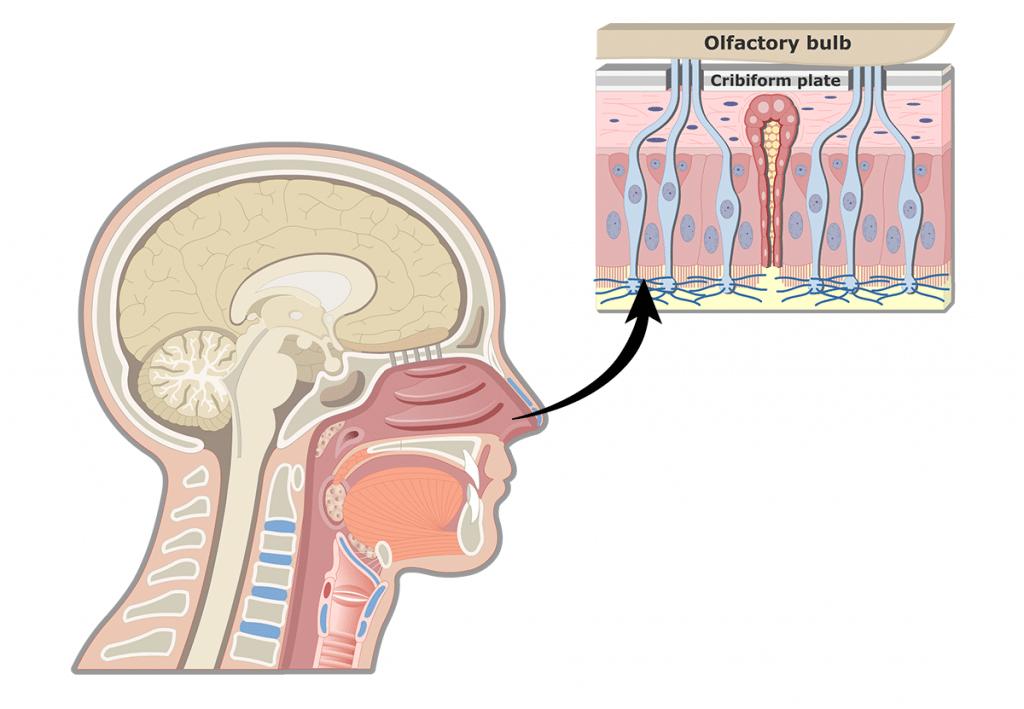 mucosa nasal donde se da epistaxis posterior