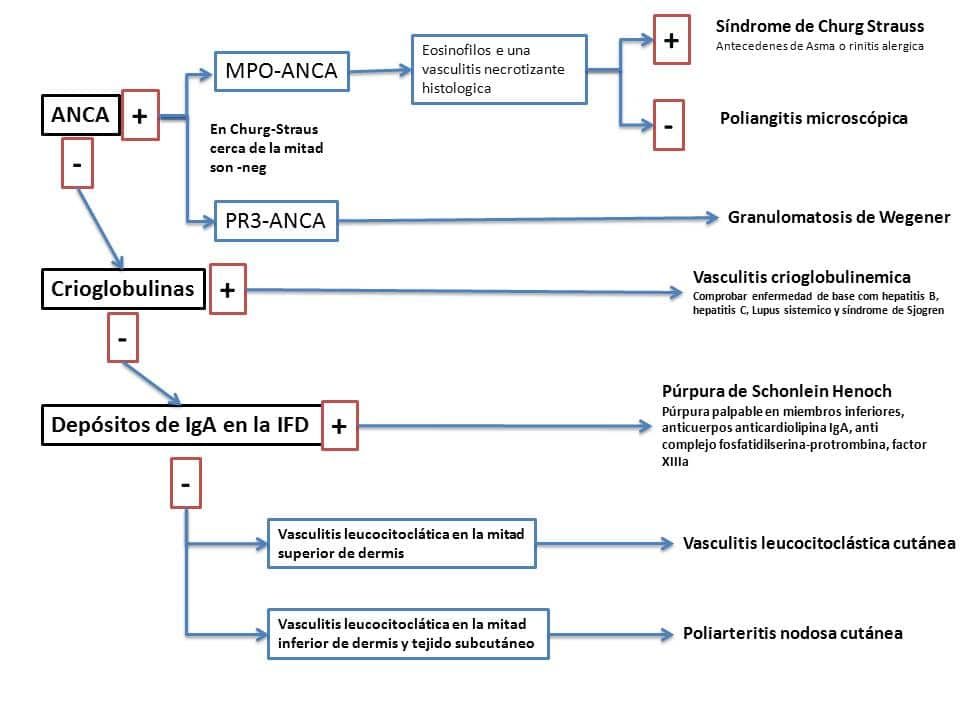granulomatosis de wegener-2