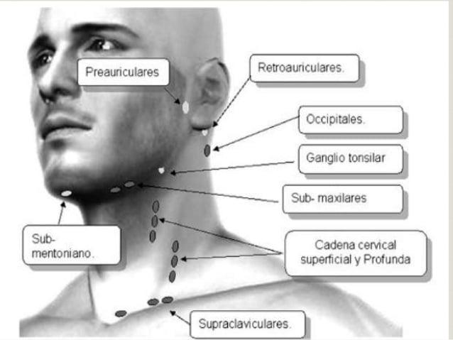 herpes en la nariz-21