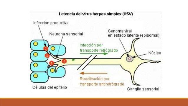 herpes en la nariz-7