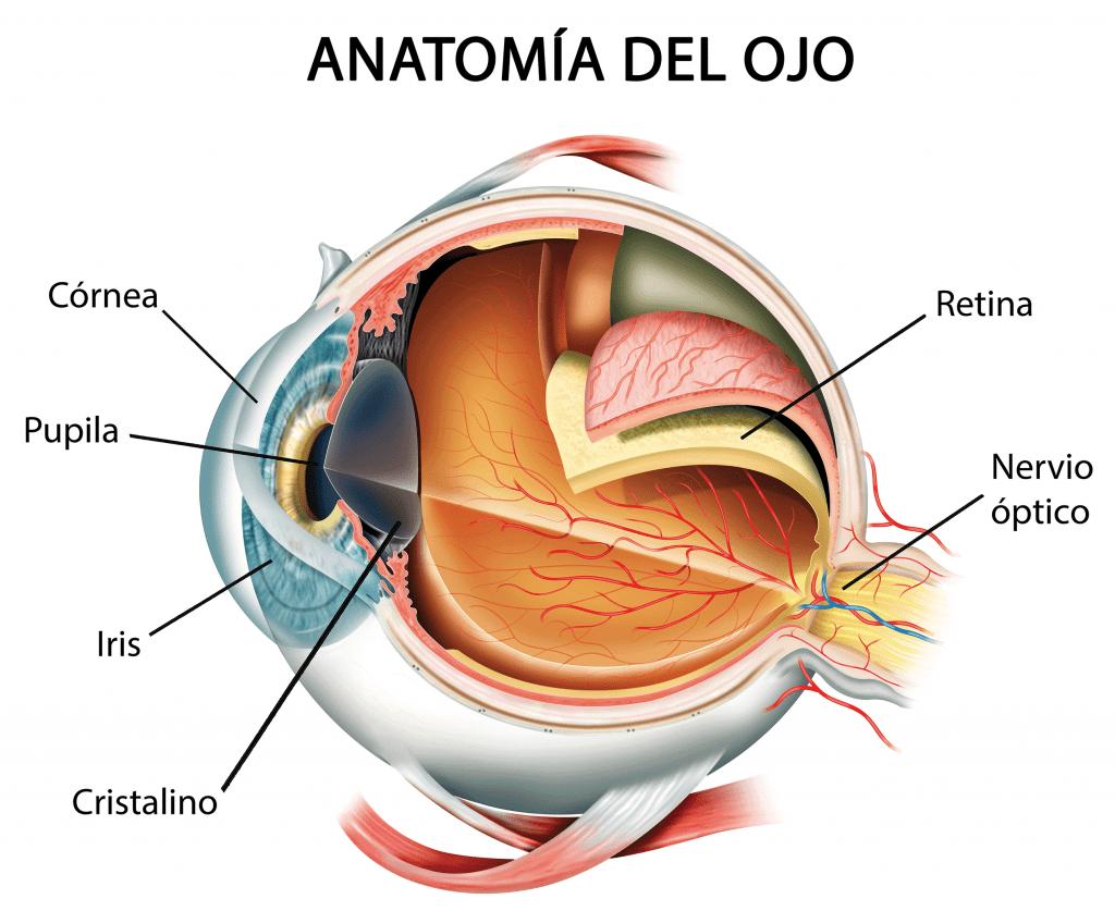 retina donde se da la retinopatia