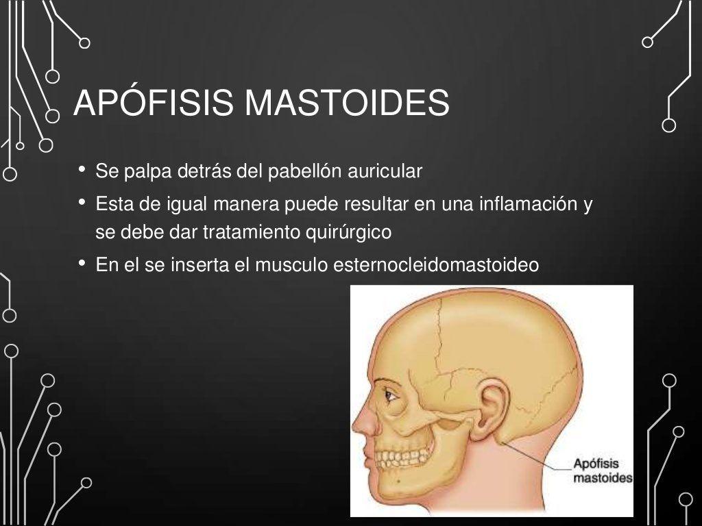 apofisis mastoides