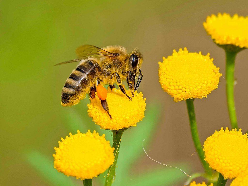 polen y Rinitis