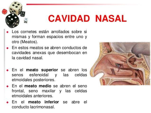 Rinitis y la estructura de la nariz
