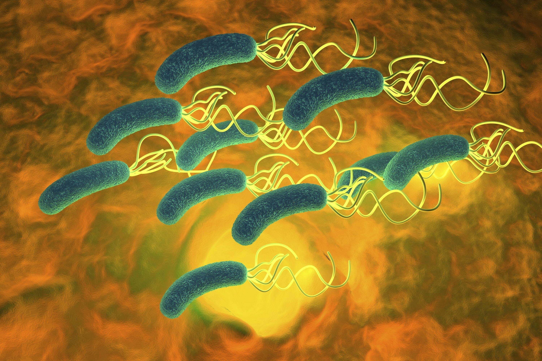 bacteria en el est...H. Pylori