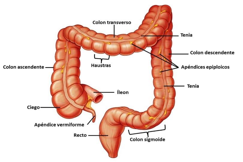 dolicocolon