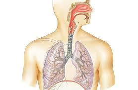 neumonia lipoidea fisiologia
