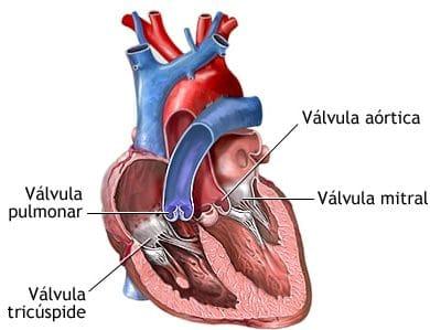 soplos cardiacos partes